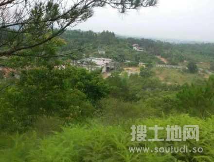惠州惠东山林山地出租