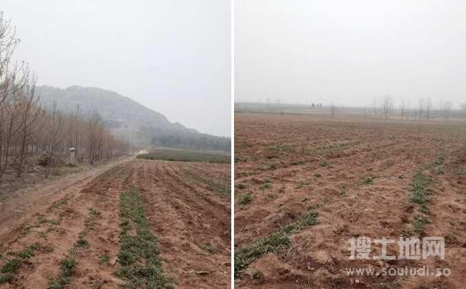 连云港东海县羽山脚下20亩农田出租